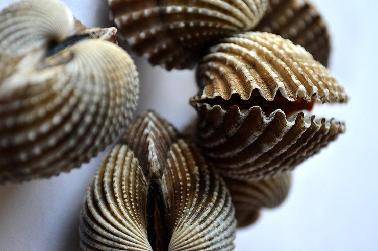 mussels-390505.jpg