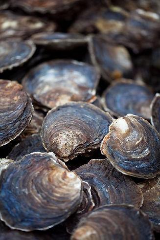Zeeuwse-platte-oesters-2.jpg