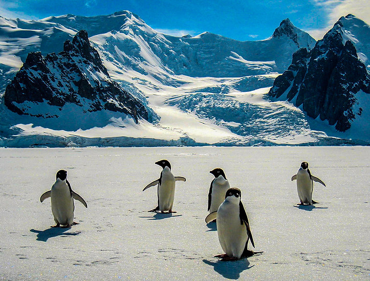 Adelie Penguins, 2009, Photography