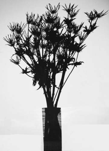 Eryngium Pen Blue, 2018, Black Matte Acrylic