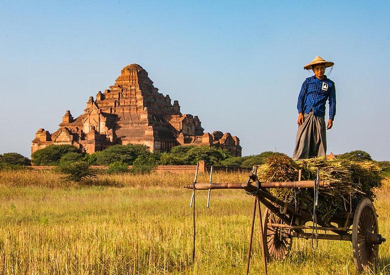 Farmer and an Ancient Pagoda Near Bagan