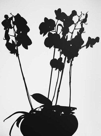 Purple Moth Orchids, 2018, Black Matte Acrylic
