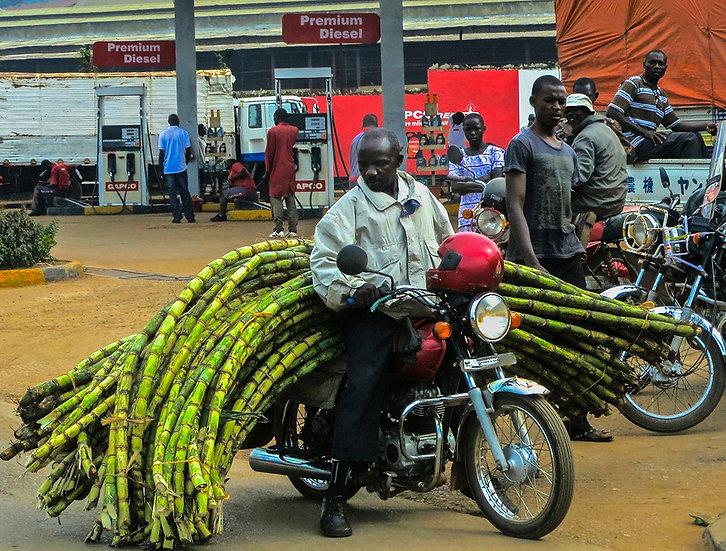 Transporting Sugarcane, Uganda