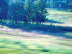 Trees In Motion_ Photograph.jpg