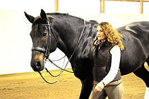Michigan Dressage horses for sale
