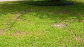 Does your lawn have brown spots?