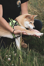 souplesse chiens ALT