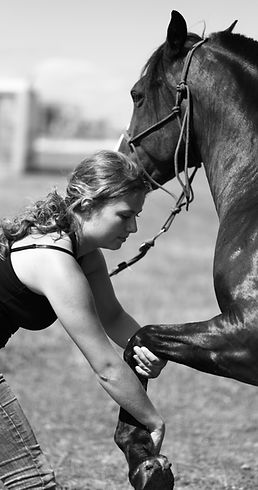 Perform'horse & dog ALT