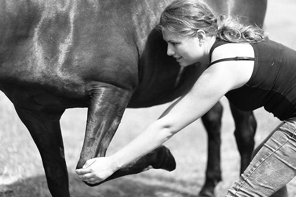Perform'horses ALT
