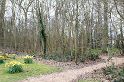 Woodland Walk in Bradwell Village
