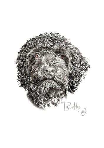 Buddy (Fern).jpg