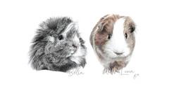 Bella & Luna Guinea Pigs.jpg