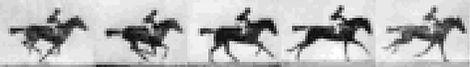 Horse_input.jpg