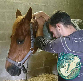 Cheval | Masseur Equin Canin