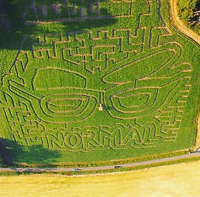 The Normal for Norfolk Maize Maze at Wiveton Hall - visit while camping with us at Amber' Bell Tents - North Norflk Glampng