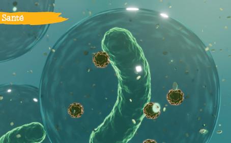 Le microbiote intestinal, un acteur majeur de votre santé