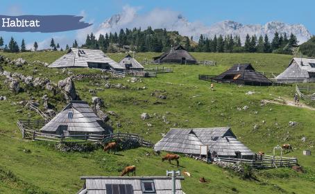 Et si on s'inspirait des éco-villages et co-habitats pour co-créer un nouveau futur ?