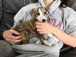 OCantilli_Puppies_8w_09
