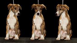 OCantilli_Puppies_8w_19