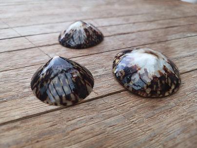 baby shell (2).jpg