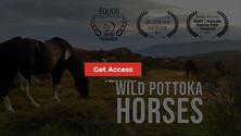 """Wild Pottoka Horses"" en la plataforma americana Horse TV"