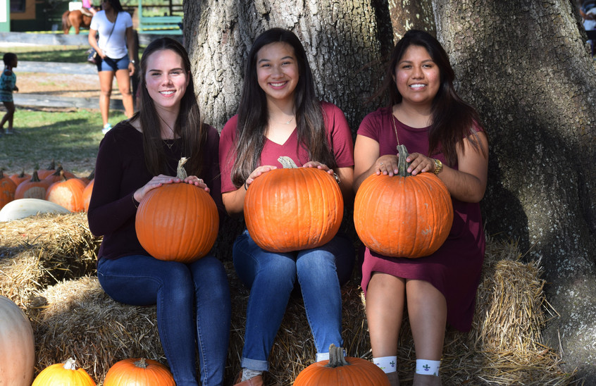 Three Pumpkins in a Patch <3