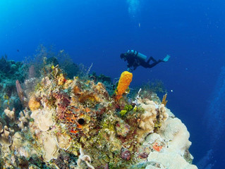Underwater Photography: A good underwater picture of your dive buddy - is it an elusive quest?