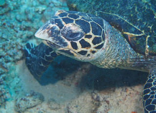 Underwater Photography: Why are my pictures all blue?
