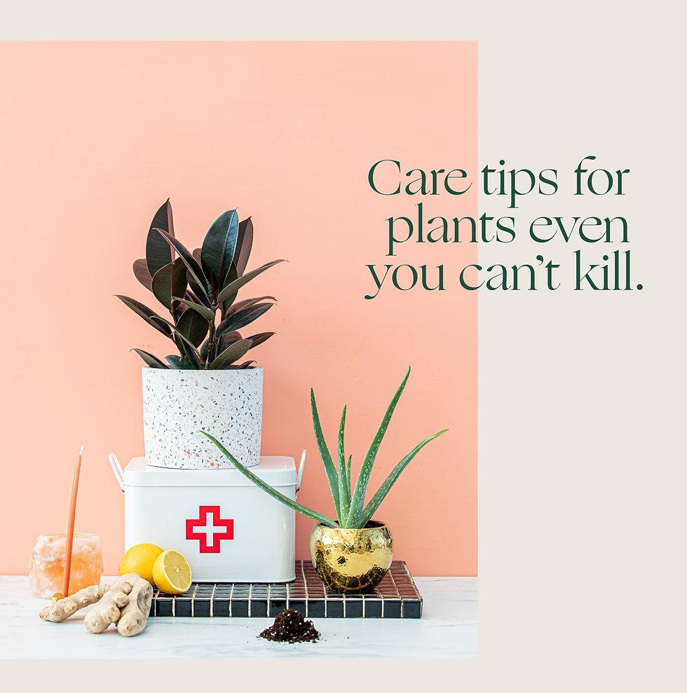 4_foli_plantcare.jpg