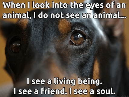 when-i-look-into-the-eyes-of-an-animal-i