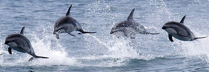 Dennis-Buurman-Dolphin-Encounter-Landing