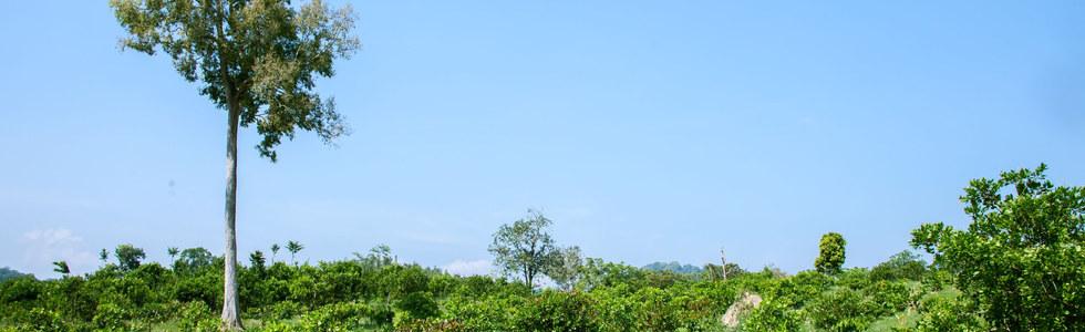 Ta Lai Activity _Trekking_001.jpg