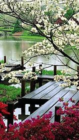 Primavera.jpg