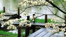 """Il giardino zen """"che non c'è"""""""