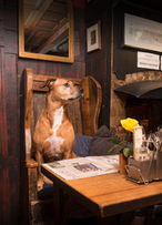 Belle the Dog Old Bookbinders