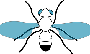 Fly_vector drosophila.png