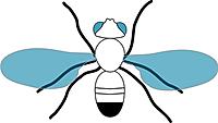C_elegans-01.png