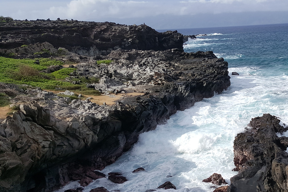 Photo of West Maui shoreline at Oneloa Beach showing the late stage Honolua Volcanics. Note flow banding in the gray rocks at the left.