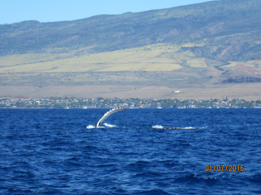 Whale watching in winter