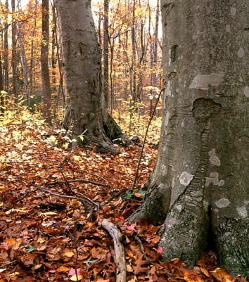 Forest-at-Crows-Nest-Natural-Area-Preserve.jpeg
