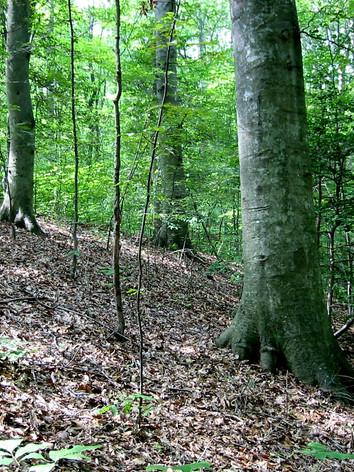 Hardwood-Forest-at-Crows-Nest-Natural-Area-Preserve.jpeg