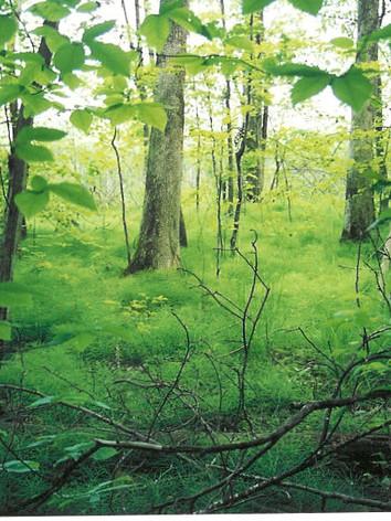 Equisetum-Marsh-at-Crows-Nest-Natural-Area-Preserve.jpeg