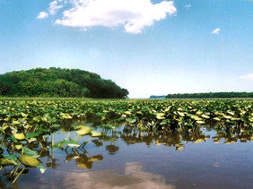 Stafford County uses TDR program to grow Crow's Nest preserve by more than a third