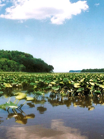 Marsh-View-of-Crows-Nest-Natural-Area-Preserve.jpeg