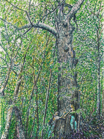 The-Forests-Drawing-of-Crows-Nest-Natural-Area-Preserve.jpeg