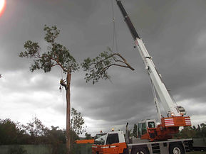 Tree Lopping & Weed Control
