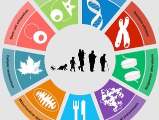The booming longevity & healthspan boosting industry