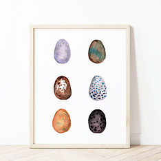 Egg Chart Display.jpg
