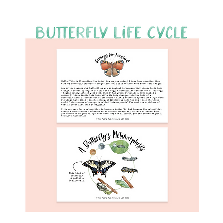 Buttefly Life Cycle.png