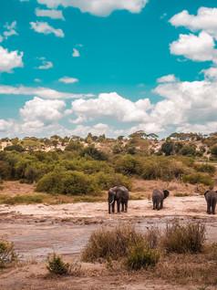 Tanzania Safari / Zanzibar